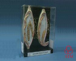 Biotechnology Exhaust Cum Laminar Flow Cabinet